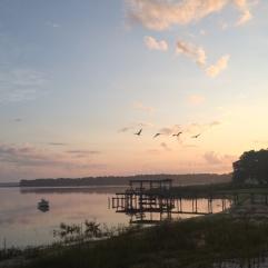 EARLY MORNING. Amrit Yoga Institute sunrise. Salt Springs, FL