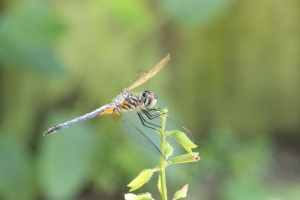 Dragonfly awesomeIMG_7743