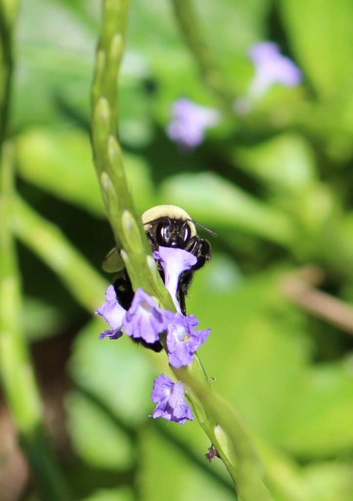 Bee IMG_0177