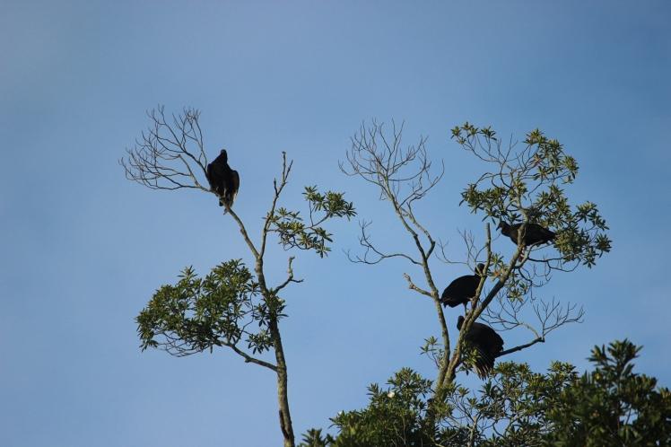FB WB vultures sun IMG_8371