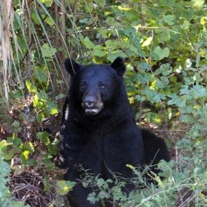 Bear IMG_1248