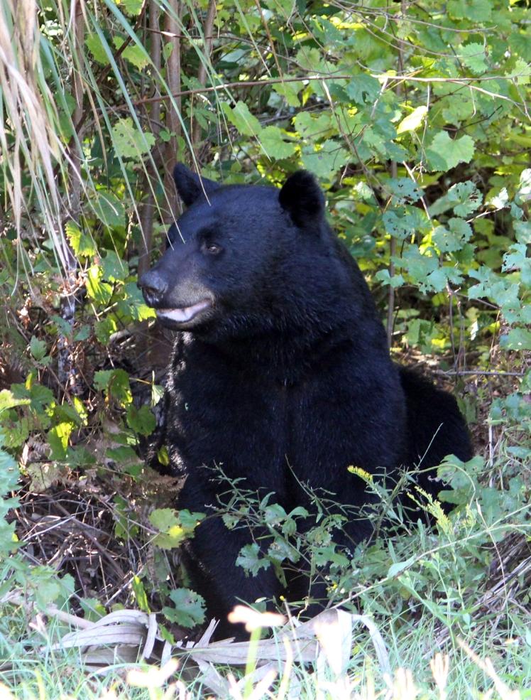 Bear IMG_1249