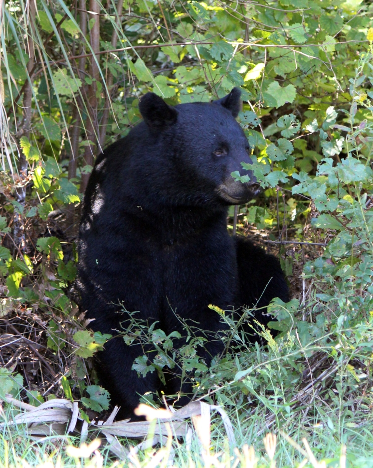 Bear IMG_1250