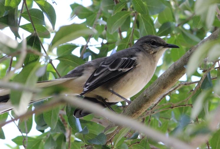 birdy IMG_0907