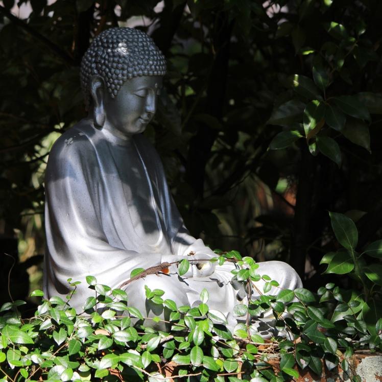 Buddha lizard IMG_0963