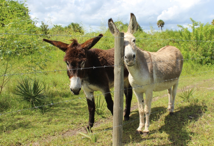 Donkeys IMG_0410