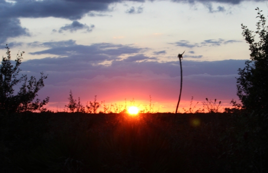 Forest sunset IMG_1313