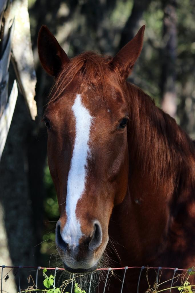 horsey IMG_1795