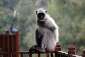 Monkey IMG_3761