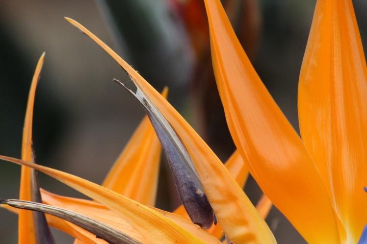 Orange IMG_1545