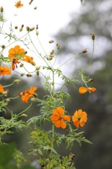 Sweet little orange flowers. Oviedo, FL