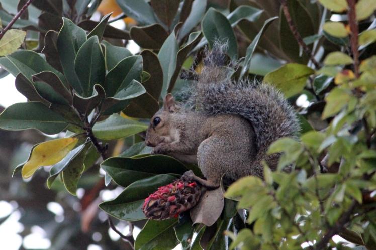 Squirrel IMG_1138