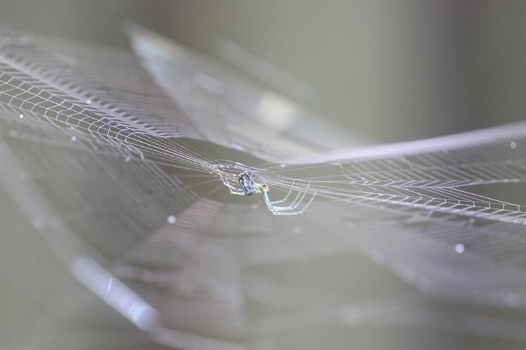spider IMG_2058