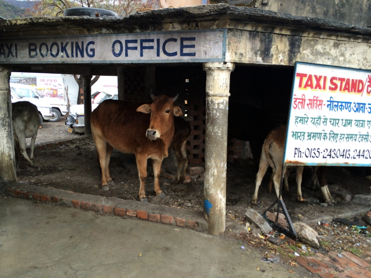 Rishikesh IMG_1300