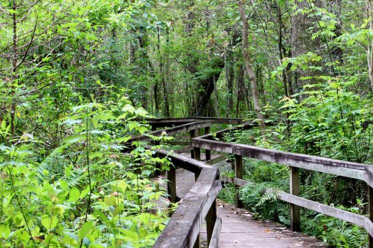 Cool and inviting boardwalk through the woods at Lake Mills Park, Chuluota, FL