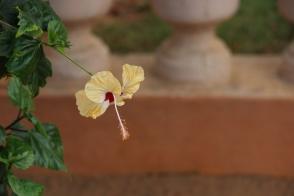 Grace. Pondicherry, India