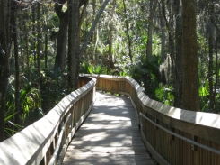 Peaceful boardwalk. Blue Springs Park, Orange City