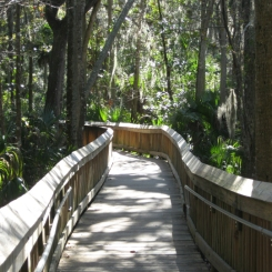 Peaceful boardwalk. Blue Springs Park, Orange City