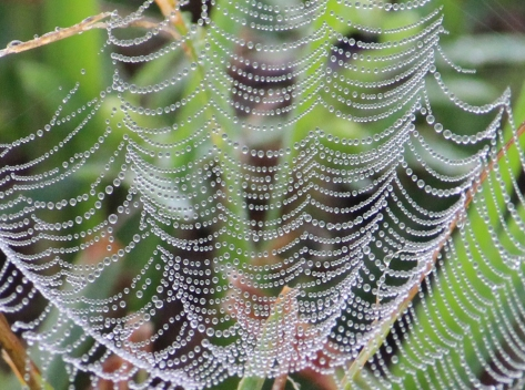 Ground spider web IMG_0511
