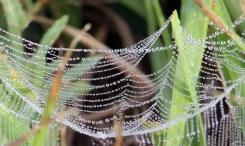 Ground spider web. Christmas