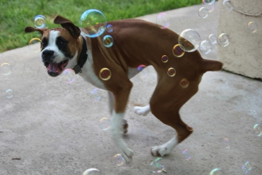 DOGGIE having some quality bubble time. Yorba Linda, CA