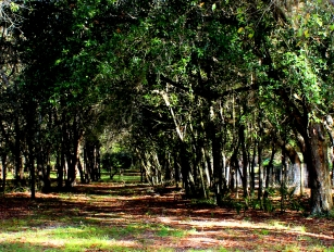 Inviting Path. Lake Mills Park, Oviedo, FL