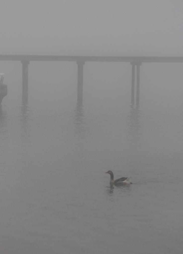 fog IMG_7923