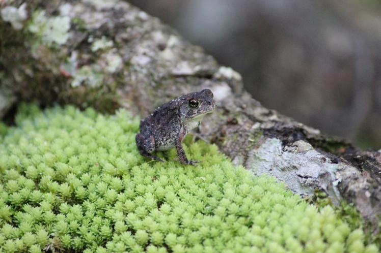 Frog IMG_9311