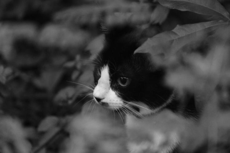 kitty andersen IMG_9094