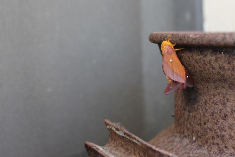 moth on milk jug IMG_7037