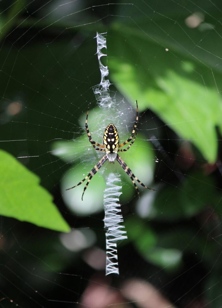 spider IMG_0941