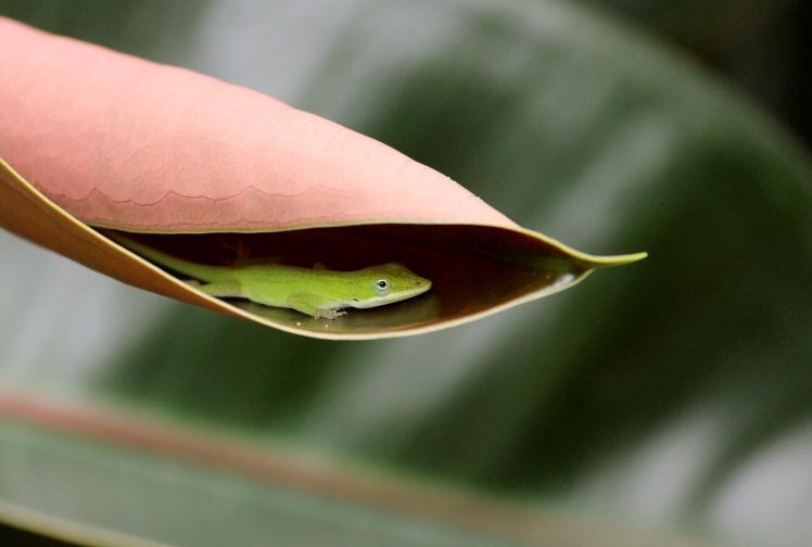 gecko IMG_9073