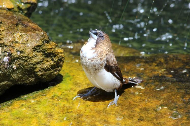 birdie IMG_3742