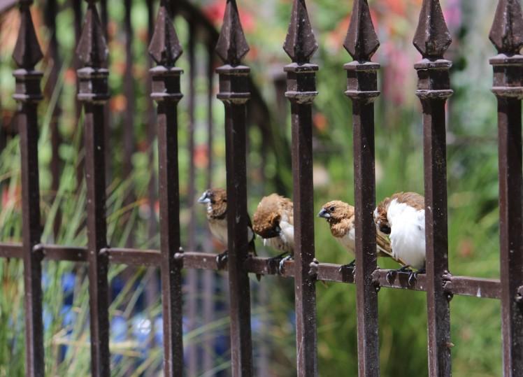 birdies IMG_3708