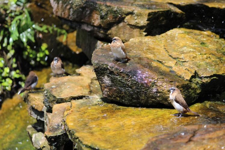 birdies IMG_3728