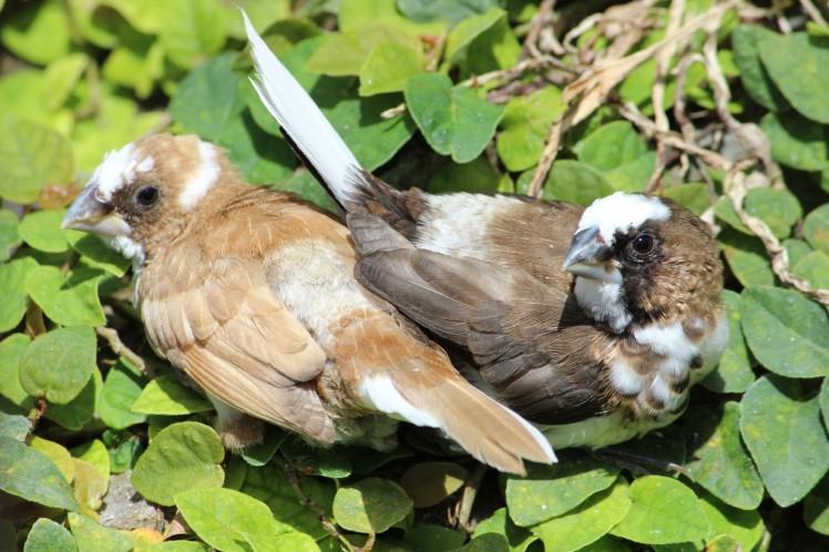 birdies IMG_3734