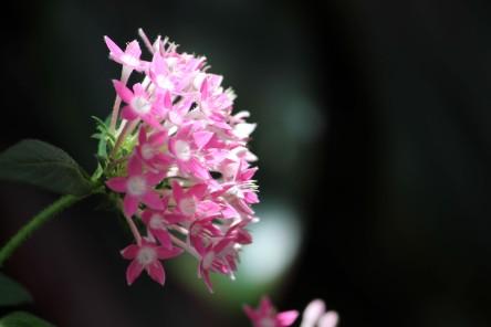 flower IMG_3695