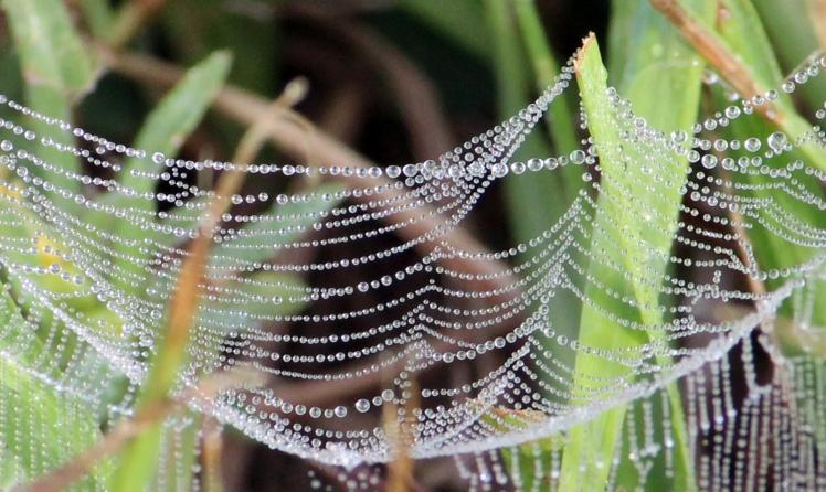 Ground spider web IMG_0516