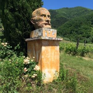 Vineyard IMG_9109