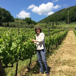 Vineyard IMG_9098